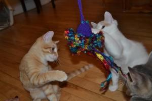 Happy cats 1